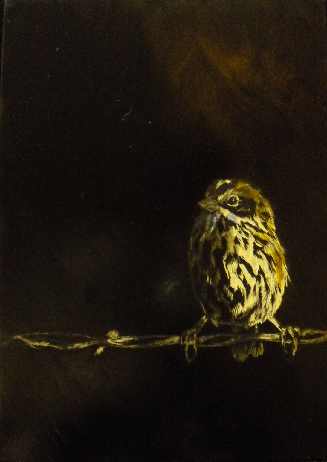 Song Sparrow in Scratchboard/Oil (2010)
